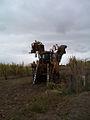 Cane harvester.jpg