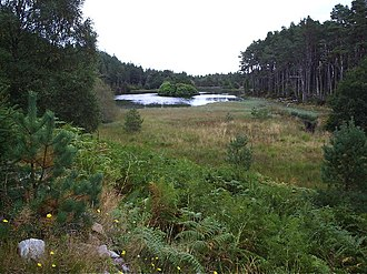 Battle of Carbisdale - The Royalist army was cut down near Carbisdale loch in Carbisdale woods