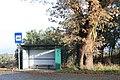 Carvalho-roble situado no lugar da Carvalheira, Guimarei - 03.jpg