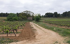 Castelnau-de-Guers - Vineyard and Mas du Sol