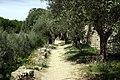Castiglione del Lago - panoramio - DerBilch.jpg