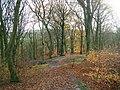 Castle Clough Wood - geograph.org.uk - 1596500.jpg