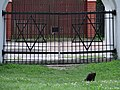 Cat and Star-of-David Gate - Jewish Cemetery - Wschodnia Street - Bialystok - Poand (36137252991).jpg