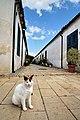 Cat in Samanbahçe, Nicosia.jpg