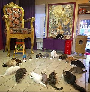 "Cat café - Cat cafe ""Cats Republic"" Saint Petersburg, Russia"