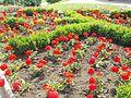 Central Park, flower bed in Gyömrő, Pest County, Hungary.jpg