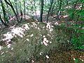 Cetatea dacică de la Tilişca. Secţiune val pământ, terasă inferioară, Nord..jpg