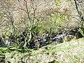 Ceunant Afon Gafr Ravine - geograph.org.uk - 436561.jpg