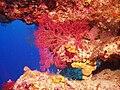 Chagos 022.jpg