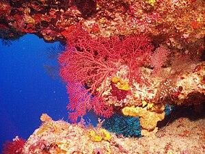 Chagos Archipelago - The Chagos Archipelago is a hotspot of biodiversity in the Indian Ocean