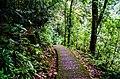 Cherrapunjee Rain Forests (7158995667).jpg
