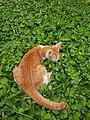 Chiang Mai kitties - 2017-07-09 (007).jpg