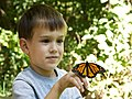 Child boy face with butterfly.jpg