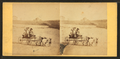 Children in goat cart on beach, from Robert N. Dennis collection of stereoscopic views 12.png