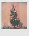 Christmas tree (6560853415).jpg
