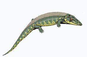 Chroniosaurus dongusensis aus dem Oberperm von Russland.