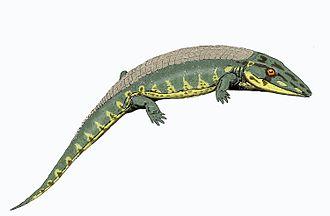 Chroniosuchia - Image: Chroniosaurus dong 12DB