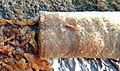 Cigarette butt on wet sidewalk after heavy rain Mégot 01.jpg