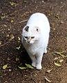 City of London Cemetery - Cemetery café cat.jpg