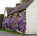 Close-up of Wisteria Cottage, Marton (2) - geograph.org.uk - 1292449.jpg