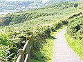 Coastal Path, East of Rotherslade - geograph.org.uk - 1481431.jpg
