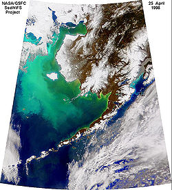 Satellite image of a large algal bloom in the Bering Sea in 1998.