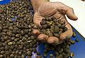 Coffee grains and hand.jpg