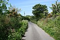 Colourful Hedgerows - geograph.org.uk - 177561.jpg