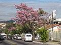 Conforto, Volta Redonda - RJ, Brazil - panoramio.jpg