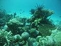 Coral Kapoposang Island.jpg