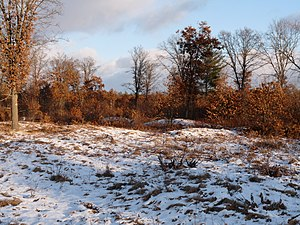 National Register of Historic Places listings in Juneau County, Wisconsin - Image: Cranberry Creek Indian Mounds