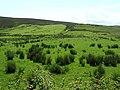 Crocknageeha Townland - geograph.org.uk - 1348054.jpg