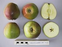 Cross section of Rabaleyze (Lozere), National Fruit Collection (acc. 1950-174).jpg