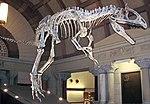 Cryolophosaurus ellioti theropod dinosaur (Hanson Formation, Lower Jurassic; Mt. Kirkpatrick, Queen Alexandra Range, Transantarctic Mountains, Antarctica) 11 (46105151272).jpg