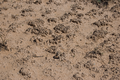 Cryptobiotic soil crust in Natural Bridges National Monument near Sipapu 20100906 - number 2.png