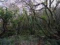 Cwm Dewi swamp - geograph.org.uk - 1637752.jpg