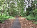 Cycleway on disused railway - geograph.org.uk - 250933.jpg