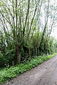 Dülmen, Naturschutzgebiet -Welter Bach- -- 2014 -- 0004.jpg