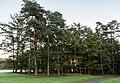 Dülmen, Wildpark -- 2014 -- 3826.jpg