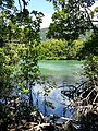 Daintree National Park, Queensland 06.jpg