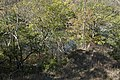 Darby Creek-Darby Creek overhead in Fall 3.jpg