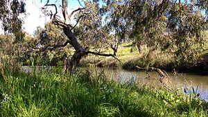 Kororoit Creek - Image: Darter on Kororoit Creek, Albion