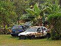 Dead Cars Under Banana Palms (23078640654).jpg