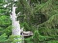 Dead tree (0c8de342b35e4abdb077f7e243cc4c86).JPG