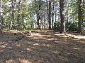 Deer Island, Amesbury, Oct 2012, G.JPG