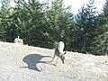 Deersystem - panoramio.jpg
