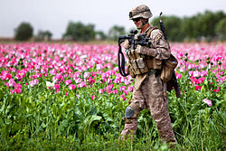 Defense.gov News Photo 110409-M-5160M-264 - U.S. Marine Corps Cpl. Mark Hickok patrols through a field during a clearing mission in Marja in Afghanistan s Helmand province on April 9 2011