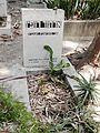Degania Alef Cemetery Arthur Ruppin.JPG