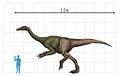Deinocheirus to scale.jpg