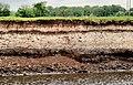 Diatomite layer near Ballymoney - geograph.org.uk - 1884421.jpg